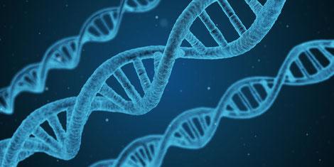 blau eingefärbte DNA-Stränge