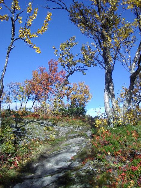 Helags Husky : Farben im Herbst