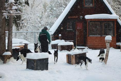 Helags Husky : Hütte vom Zwinger