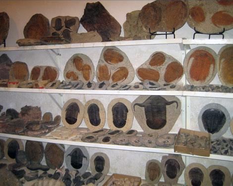 Fossilien in Erfoud, Marokko Offroad