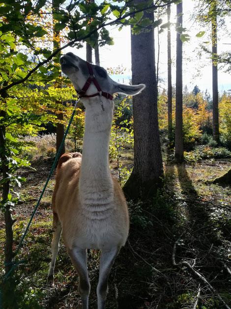 Fernando beim intensiven Waldbaden mit allen Sinnen