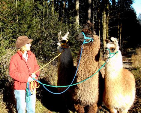 Die ersten Wanderungen 2011 mit Loretta, Fortuna und Belinda