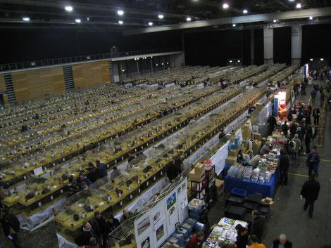 Blick in eine der drei Ausstellungshallen der Kaninchenschau Erfurt
