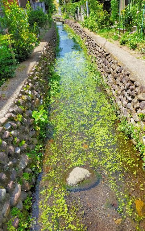 水の美しい小川