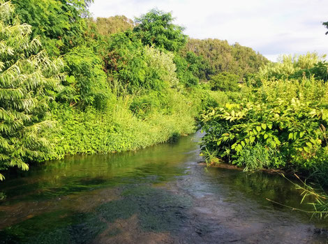 緑の木や草に囲まれた美しい最上川の流れ