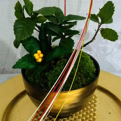 苔を配したヤブコウジ、新年のお飾り