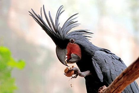 Papagei, Bild steht in keinem Zusammenhang mit hessnatur