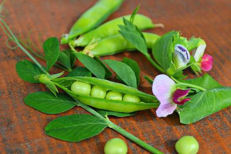 Erbsen und Erbsen- Blüten