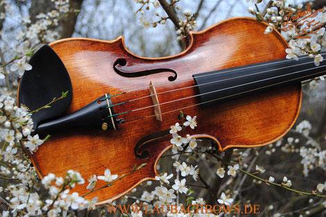 Italian master violin