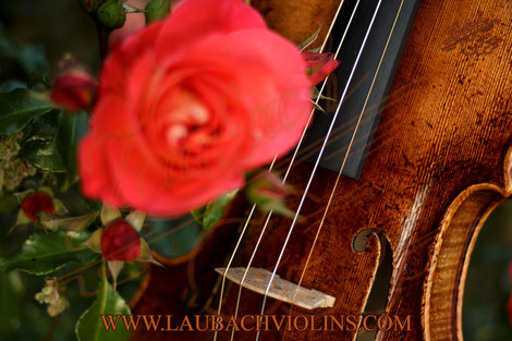 Laubach limited edition master violin