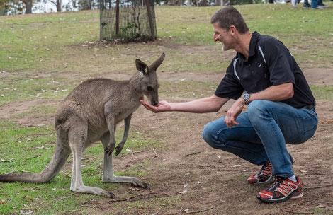 There ARE kangoroos in Australia - und manche sind recht zahm!