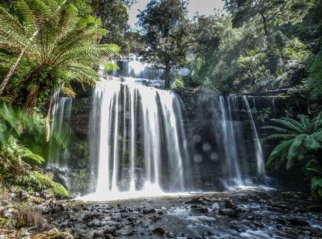 Die Russell-Falls in Tasmanien