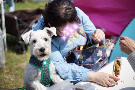 犬連れ イベント 髭犬祭 ワークショップ