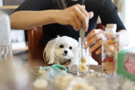 犬連れ ワークショップ 寄付活動