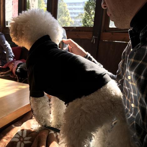 トイプードル 看板犬