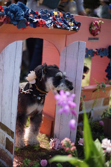 犬連れ イベント 髭犬祭 撮影セット