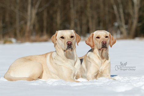 Shoot Shooting Model Tiermodel Fotografie Natur Wiese Schnee Wintershooting Hunde Tierfotografie München Bayern