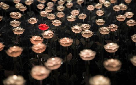 Blumenfeld mit weißen und einer roten Blume, Man