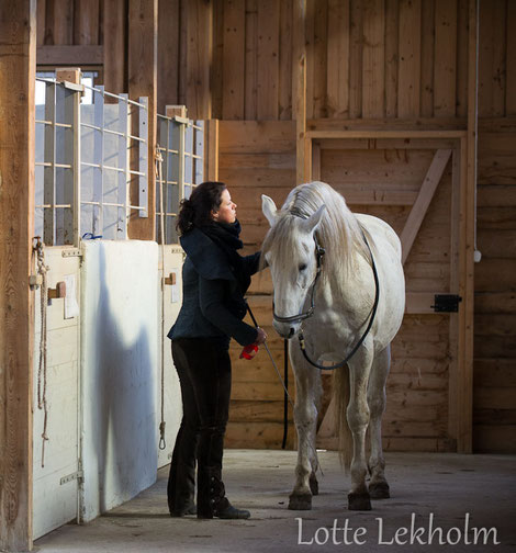 "Handling and relationship has to be trained. On the picture you see Cheval, a so called ""difficult"" horse. He was a big trouble to the interns when arriving. With proper handling and calm training, he became a super star. www.celinaharich.com"