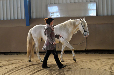 Before Bending & Stellning: A super preparation before Groundwork is Bodywork with your youngster. www.celinaharich.com