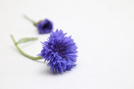 Centaurea | Kornblume Blau