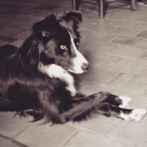 Educanis - educateur canin comportementaliste Bordeaux