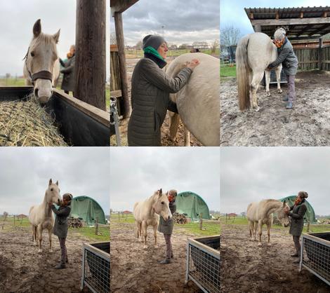 Traumabehandlung am Pferd