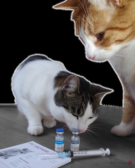 Impfungen (Foto: Tierärztin Svea Lucas)