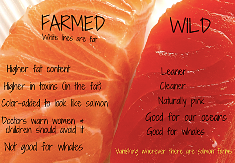 Thank you to The Lost Anchovy for this excellent picture of Wild vs Farmed salmon.