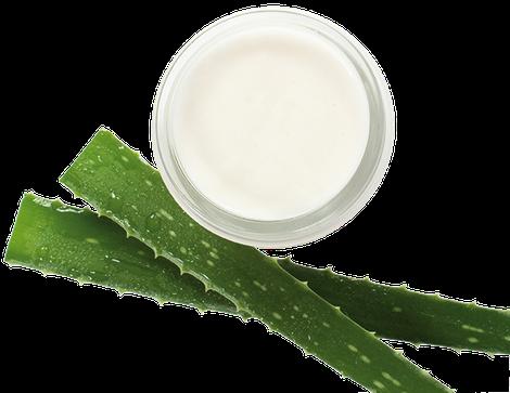 L'Aloe vera est une plante vivace connue depuis l'Antiquité en Mésopotamie, dans l'Égypte antique et dans la Grèce antique.