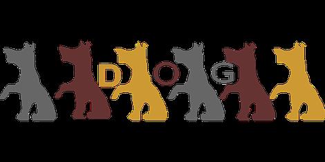 Hondenschool Rotterdam Puppycursus SHH GGB GG1 GG2 GG3 Agility Speuren Dectiespeuren Fun4paws