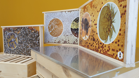 Insgesamt 30 Fotorähmchen spiegeln das Leben der Bienen im Bienenstock wieder