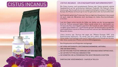 Cistus Incanus von Vegas Vital