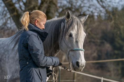 In einem Pferdecoaching dem Pferd und sich selbst begegnen_horse-feedback.ch