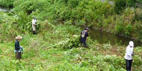 川で草を刈る人々(右から2人目が市長の倉田さん。若々しさがあふれます)
