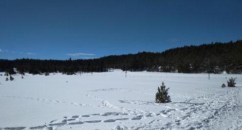 Vistes TC178 Raquetes de neu