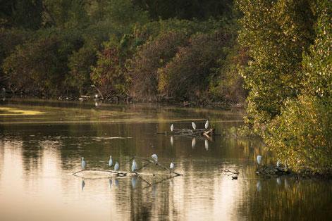 Tarn Tourisme, Réserve ornithologique de Cambounet-sur-le-Sor, Réserve Naturelle Régionale, Lpo Tarn, que faire à Puylaurens, que faire à Dourgne, réserve naturelle régionale, nature, Tarn, Occitanie, hérons, oiseaux
