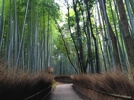 Bamboo Forest - Japan Februar 2015