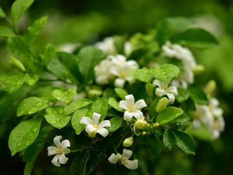 Foto:Pixabay.com Pflanzen haben hochwirksame Stoffe in ihren Düften.