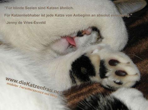 Catsitting - Mobile Katzenbetreuung Saar - Rehlingen, Siersburg, Wallerfangen, Püttlingen. Köllerbach