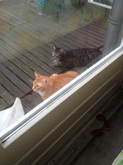 Pieter en Hans wachtend tot ik thuis kom na optreden.