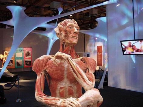 Ausstellung im Museo de las ciencias
