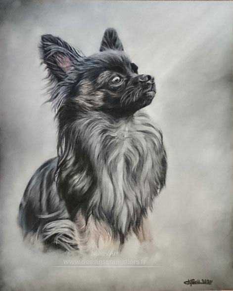 Portrait de chihuahua aux pastels secs