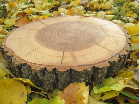 спил дерева для дорожек