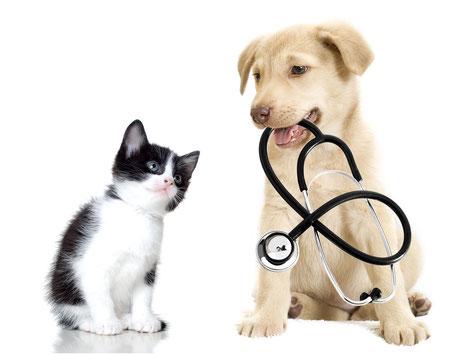 Medizinische Beratung für Mensch und Tier