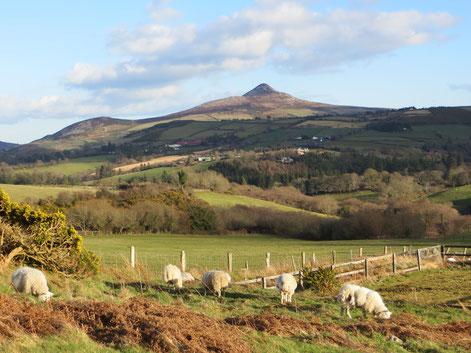 Ausblick aus unserem Zimmer auf die Wicklow Mountains.