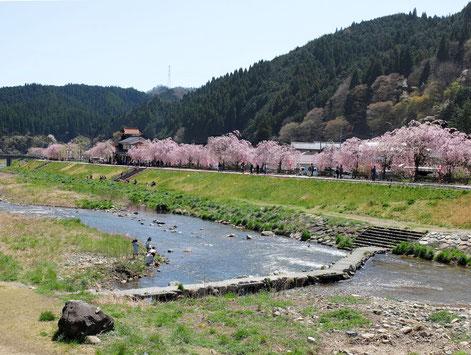 新庄村 がいせん桜まつり