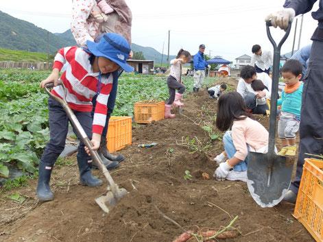 【ミモレ農園で畑ごはん】 芋掘り体験をしました!