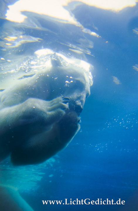 Fisch-Mahlzeit unter Wasser. Nikon F100, Nikkor 2.8/35-70mm, Kodak Elite Chrome 100 Extra Colour