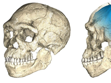 L'homme de Jebel Irhoud (Maroc), -300 000 ans